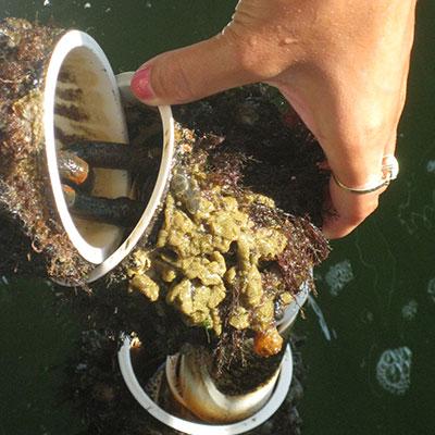 Marine Invasives