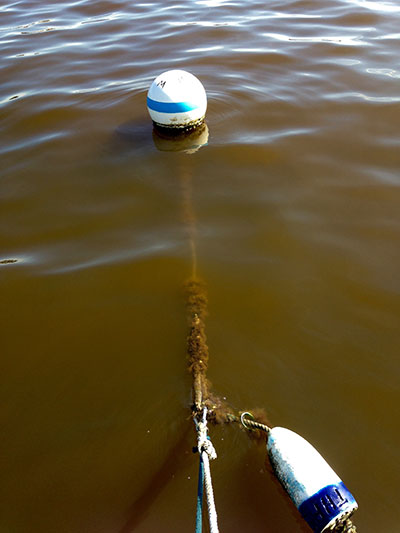 buoy muck