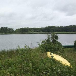 yellow canoe in marsh