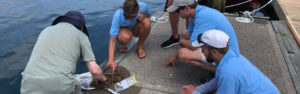 volunteers studying marine life